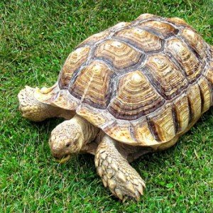 Click Frenzy and the Tortoise approach to online marketing