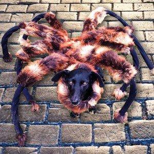 mutant-giant-spider-dog Image:  SA Wardega
