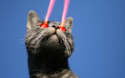 Laser Focus Cat
