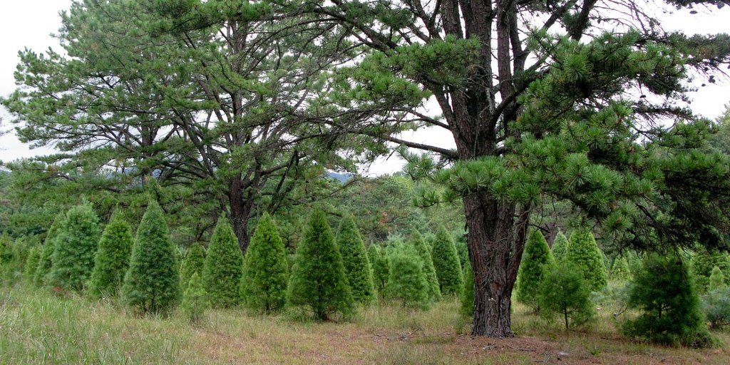 Is Customer Service Important? Christmas Tree Farm Case Study